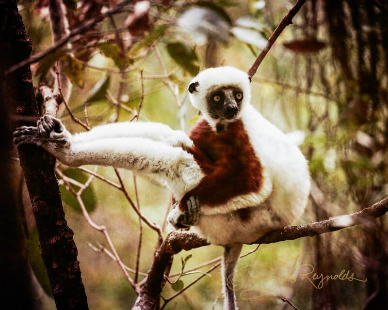 A lemur photographed by Brooke Reynolds