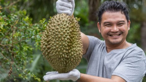 Coquism - durian farmer - Fruit-Powered