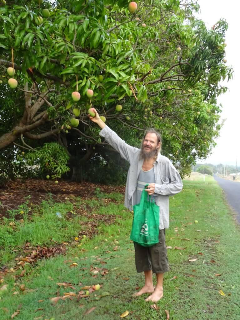 Coquism - Mango Wodzak picking fruit from trees - Fruit-Powered