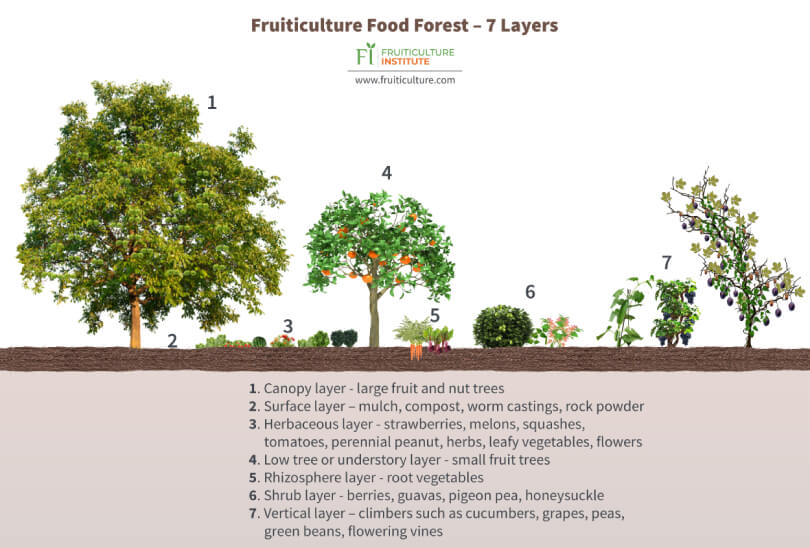 Fruiticulture food forest - Fruit-Powered