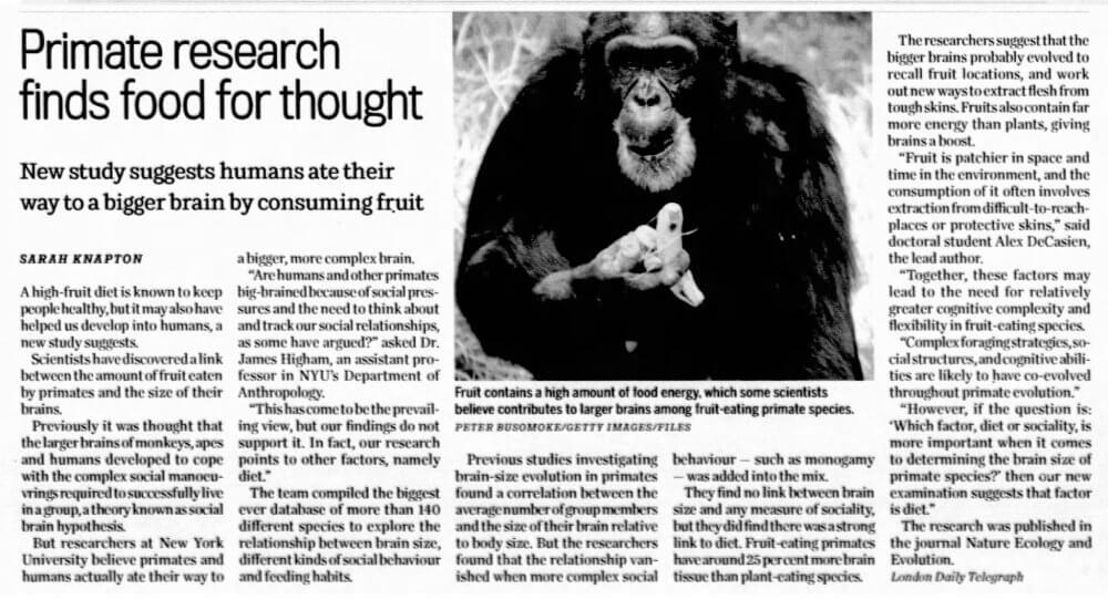 Primate research finds food for thought - newspaper article - Fruit-Powered