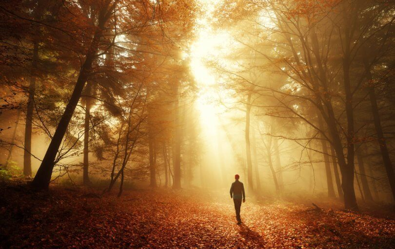 Forest bathing - enjoy the beauty and health benefits of nature - man walking in the woods in autumn - Fruit-Powered