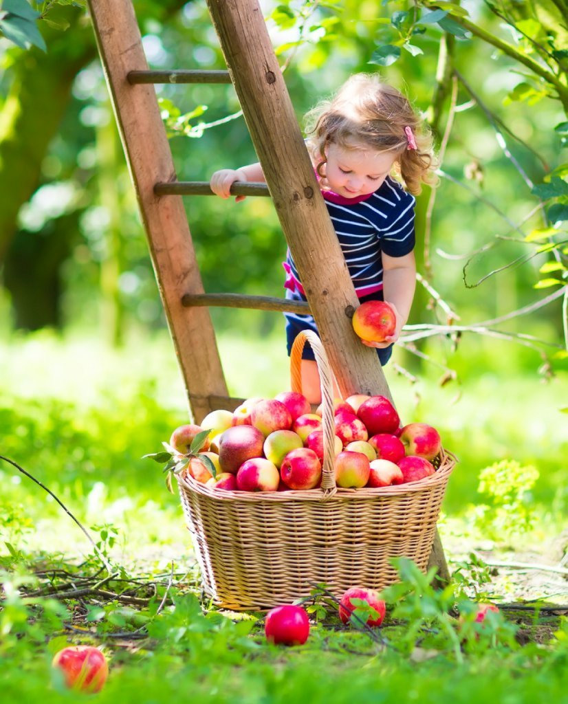 Two categories of nutrients - girl picking apples - Fruit-Powered
