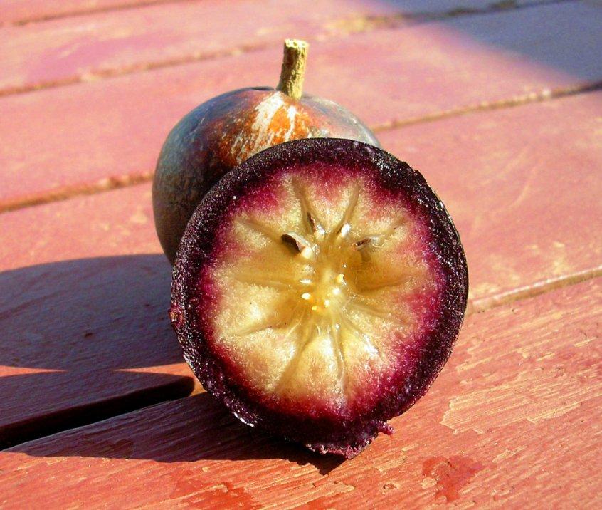 Beauty of fruit - star apple - Fruit-Powered